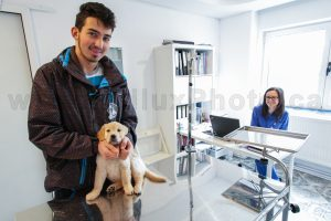 Calgary Commercial Photography Pet Animal Vet Veterinary Office Philux Photo Vancouver Toronto