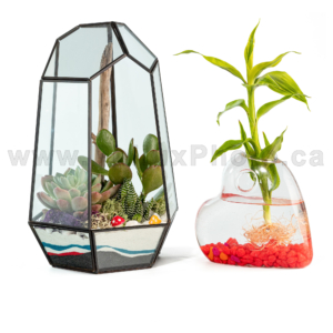 philux photo glass terrarium xmas christmas heart calgary vancouver toronto